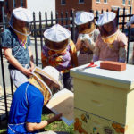 Checking the health of the hive